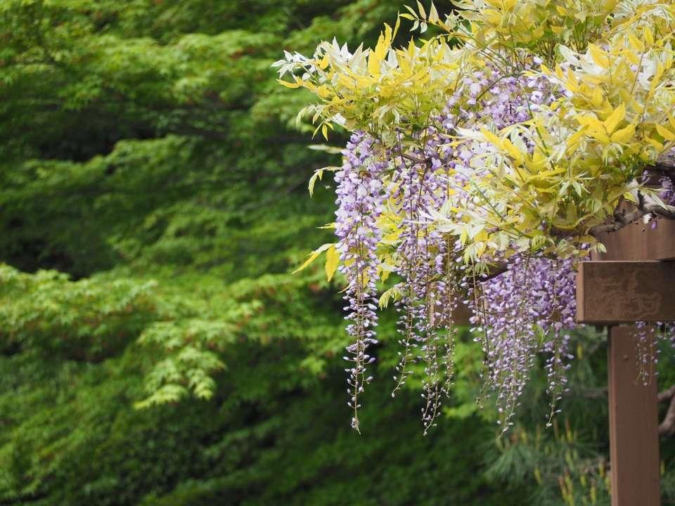 La pergola est un bon support pour vos plantes