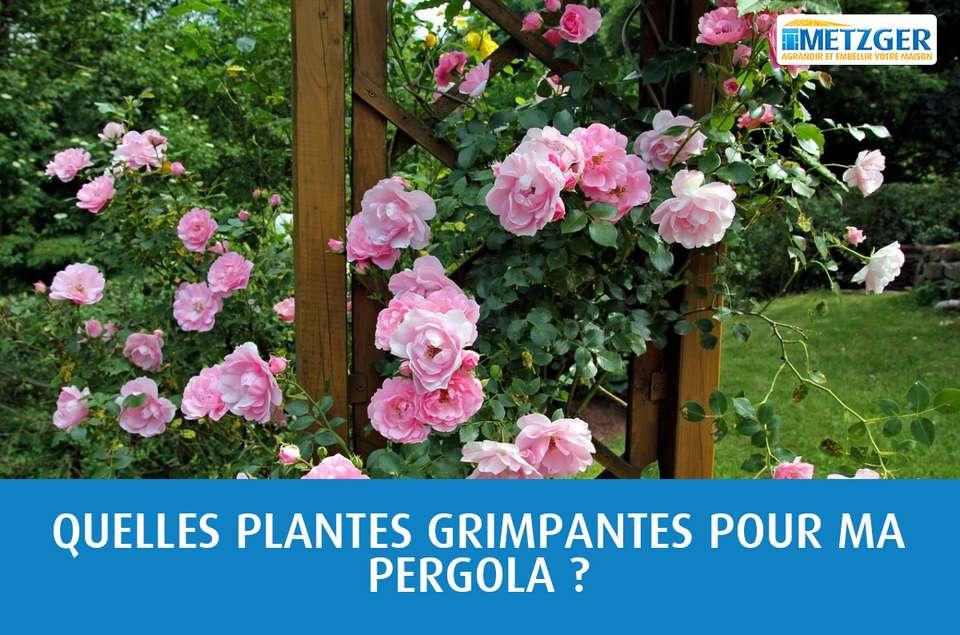 Quel Support Pour Une Glycine quelles plantes grimpantes pour ma pergola ? - metzger